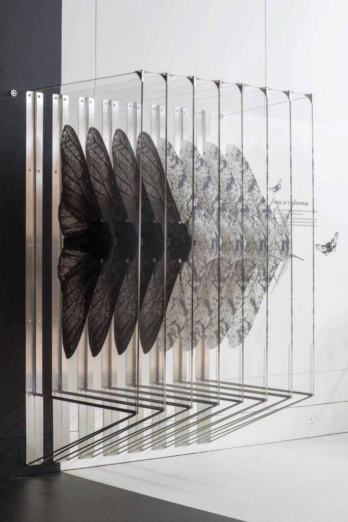 Symbol of transformation peperred moth installation